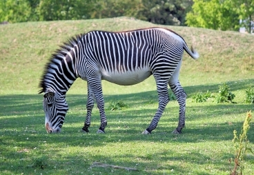 ZOO Dvůr Králové – ZOO, safari, expozice dinosaurů